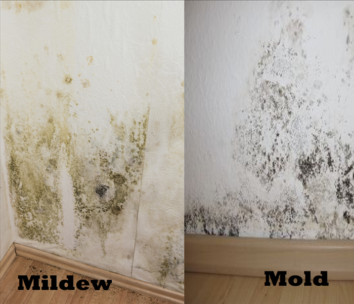 Mold Vs Mildew Servpro Of Friendswood Pearland